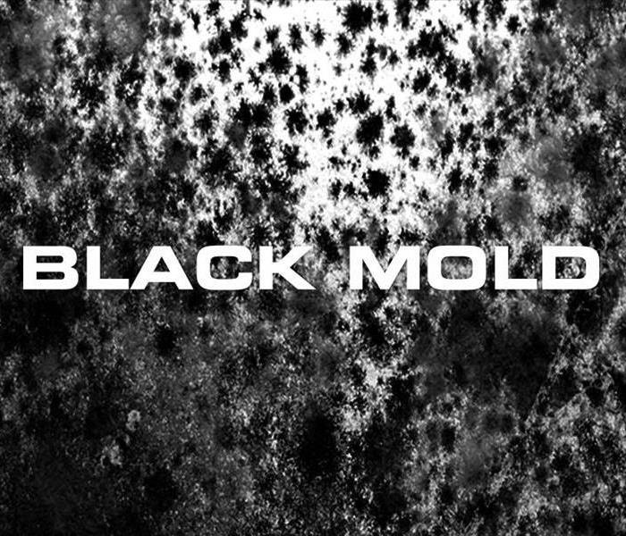 Black Mold Remediation in Youngstown