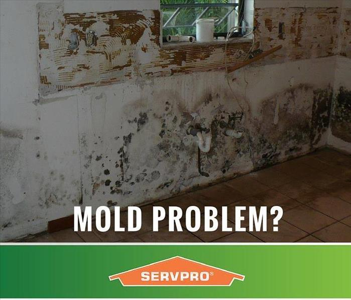 Mold Remediation Does Your Fredericksburg, Ohio Home Need a Mold Service?