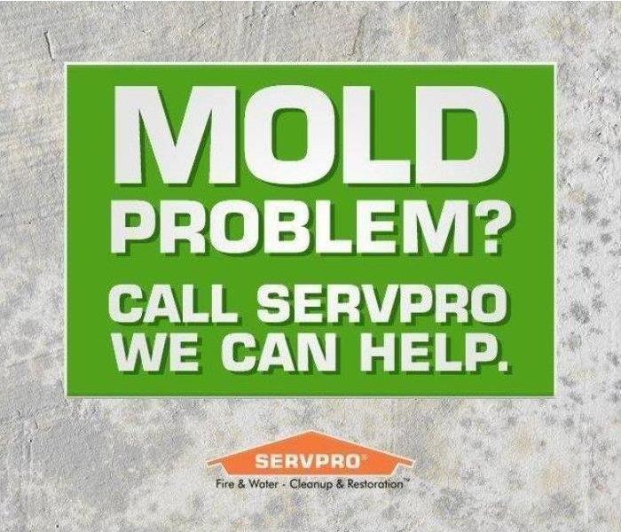 Mold Remediation Minor Mold Vs Major Mold - Canfield, Ohio